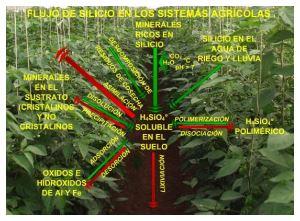 Flujo de silicio en los sistemas agrícolas.