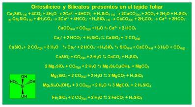 Ortosilícico y Silicatos presentes en el tejido foliar.