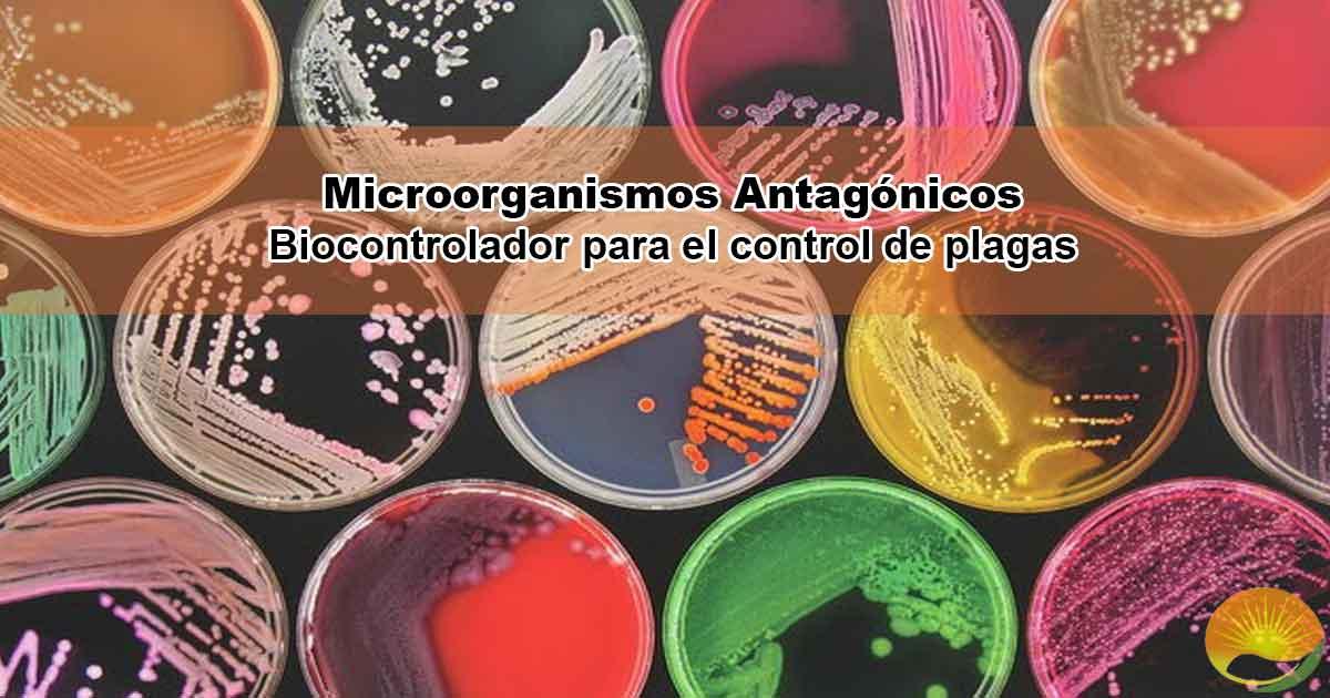 Microorganismos Antagonicos