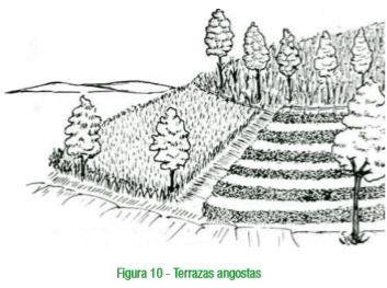 Terrazas angostas para la Conservación del suelo.