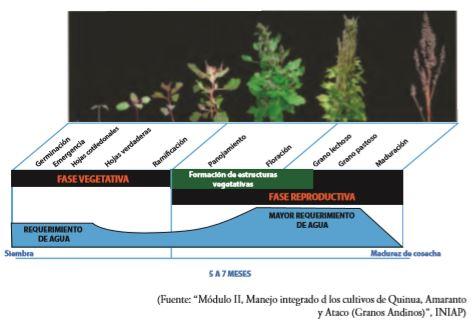 Manejo integrado de los cultivos de Quinoa, Amaranto y Ataco (Granos andinos).
