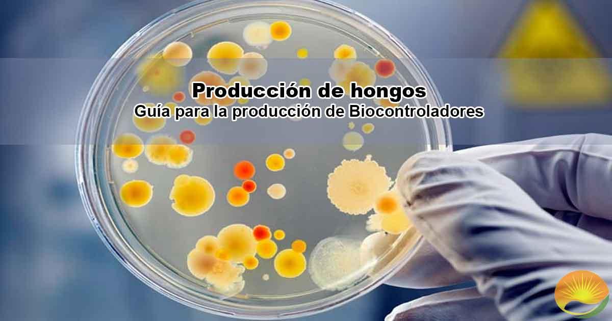 Producción hongos