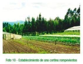 Cortinas rompevientos para la Conservación del suelo.
