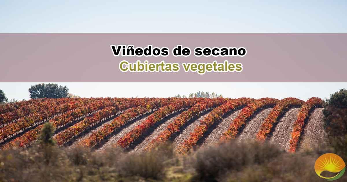viñedos de secano