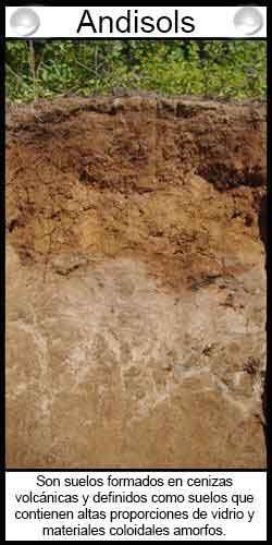 Clasificación de suelos agrícolas - Andisols
