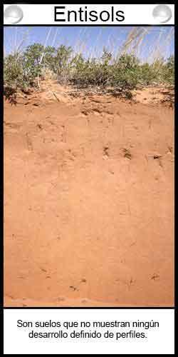 Tipos de suelos. Entisols