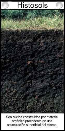 Tipos de suelos. Histosols