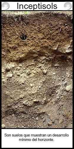 Tipos de suelos. Inceptisols