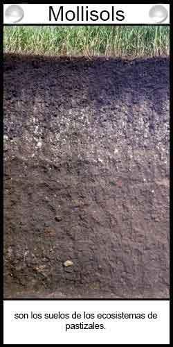 Clasificación de suelos agrícolas - Mollisols