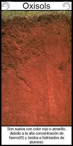 Clasificación de suelos agrícolas - Oxisols