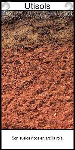 Clasificación de suelos agrícolas - Utisols