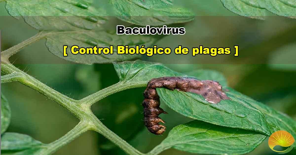 Baculovirus para el control de plagas
