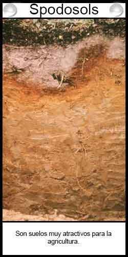Clasificación de suelos agrícolas - spodosols