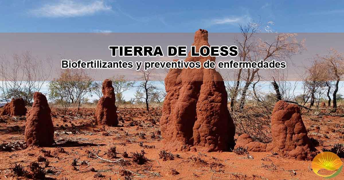 Tierra loess