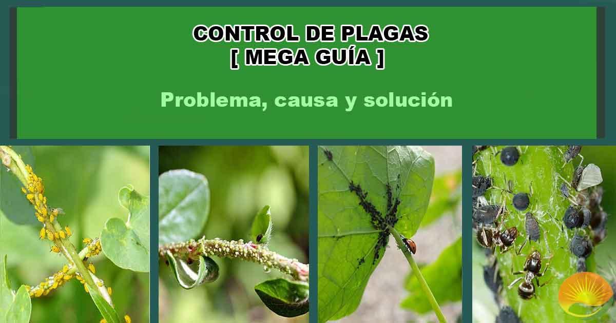 Plagas que afectan a las plantas
