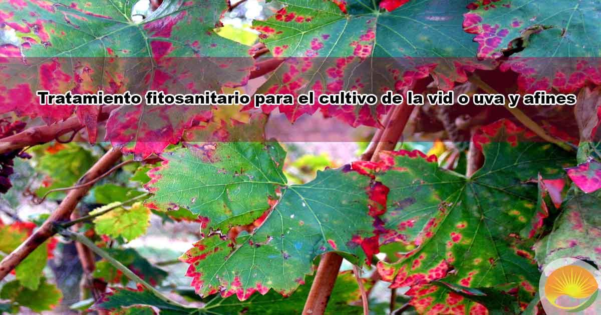 Tratamiento fitosanitario para el cultivo de la vid