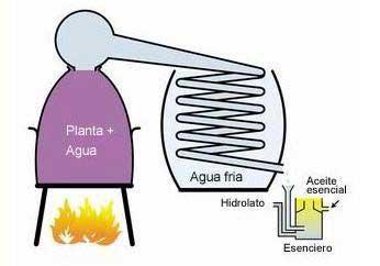 Ilustración de destilador de pelite.