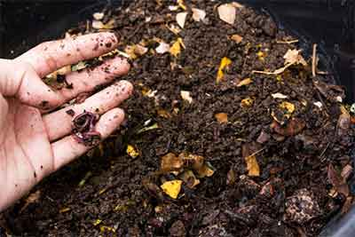 Abono orgánico casero. Fertilizantes orgánicos.