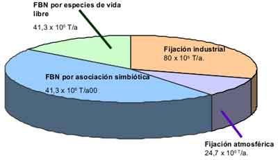 Fijación simbiótica del nitrógeno. Fertilizantes orgánicos.