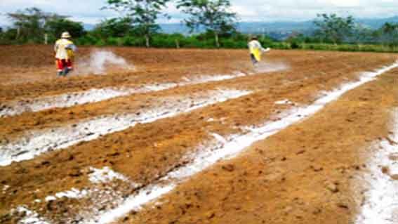 Aplicación de yeso agrícola por campesinos.
