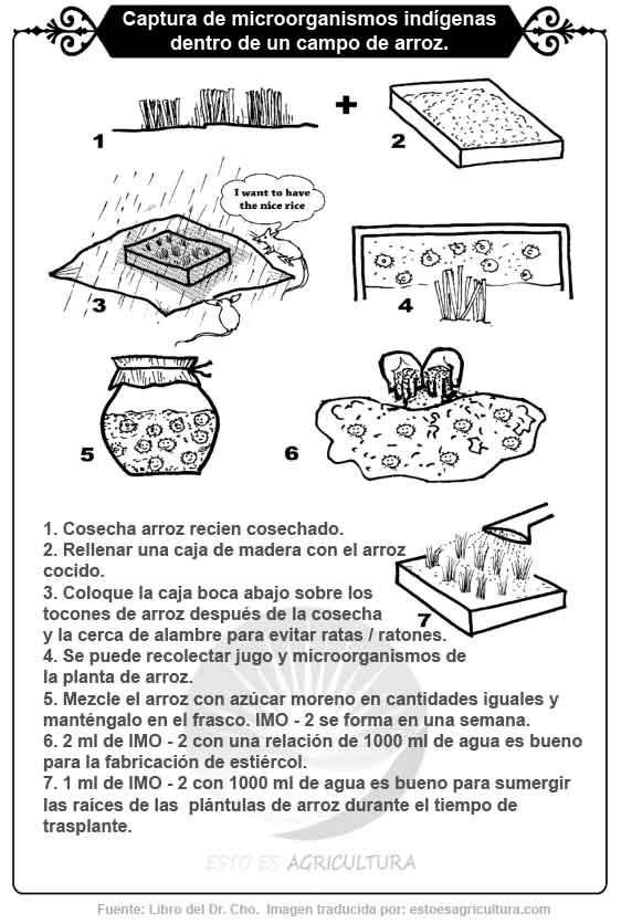 Mini curso gráfico para aprender a capturar microorganismos indígenas en un campo de arroz.