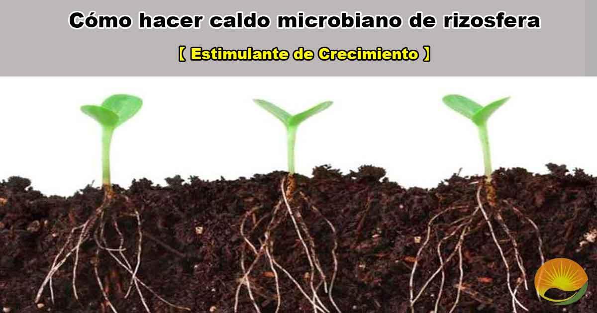 Caldo microbiano de rizosfera