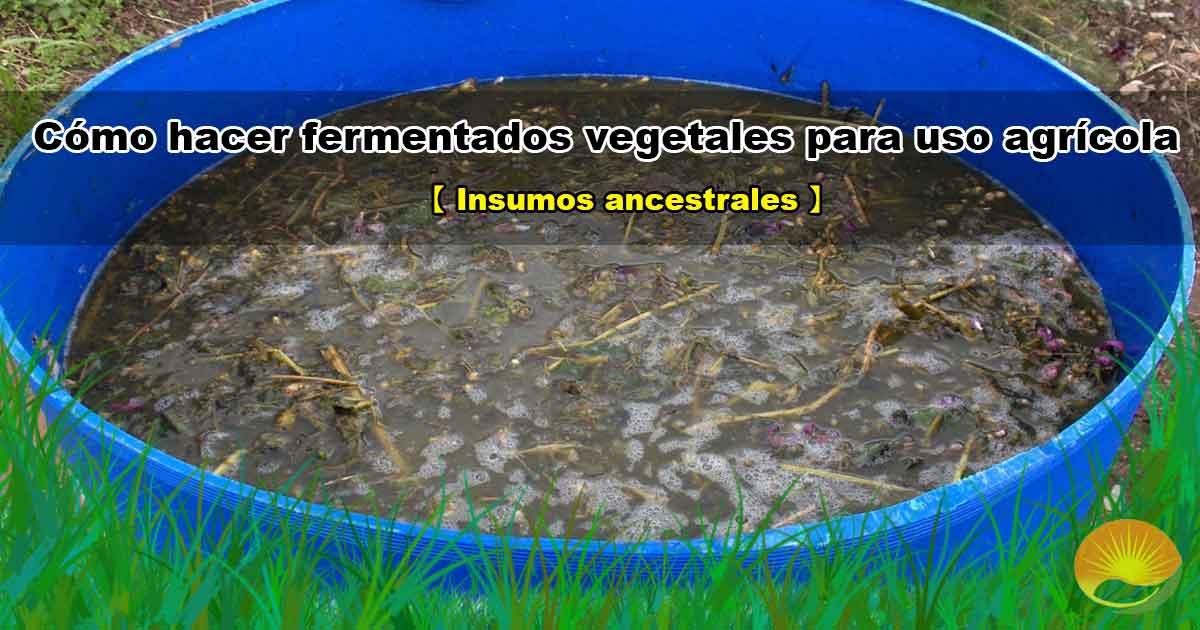 Fermentados vegetales