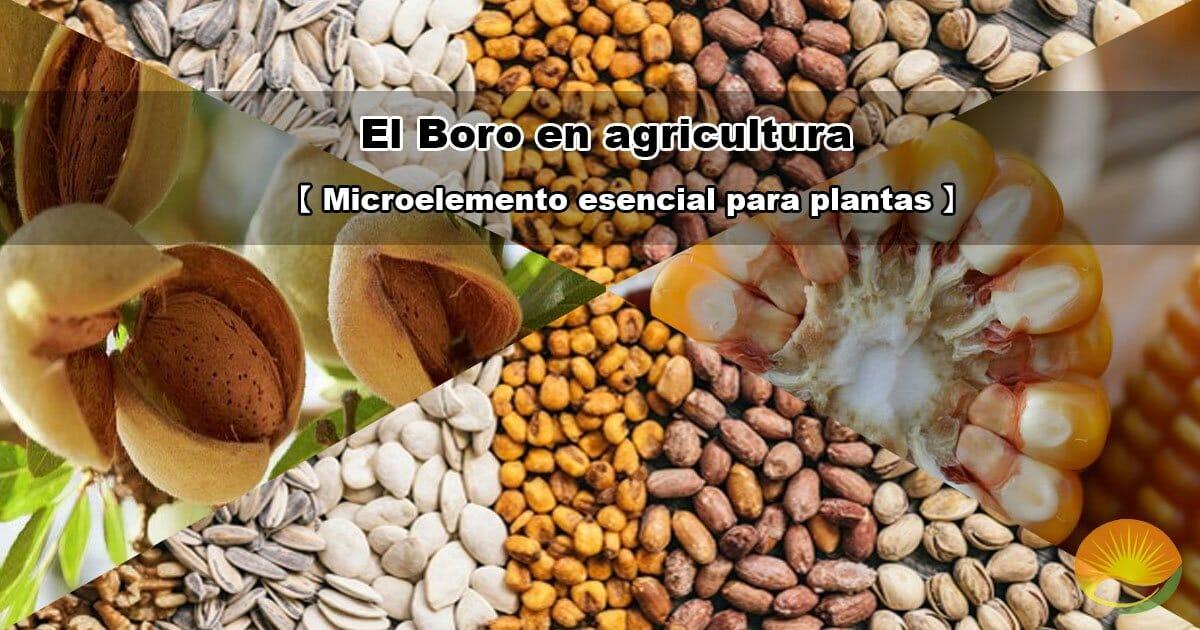 El boro en agricultura