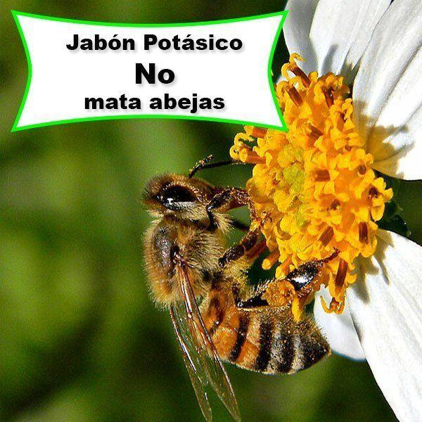 Abeja recolectando polen de una flor