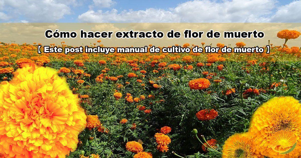 Extracto de flor de muerto