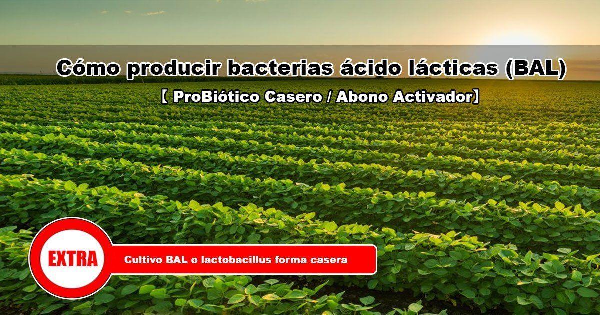 Cómo producir bacterias ácido lácticas