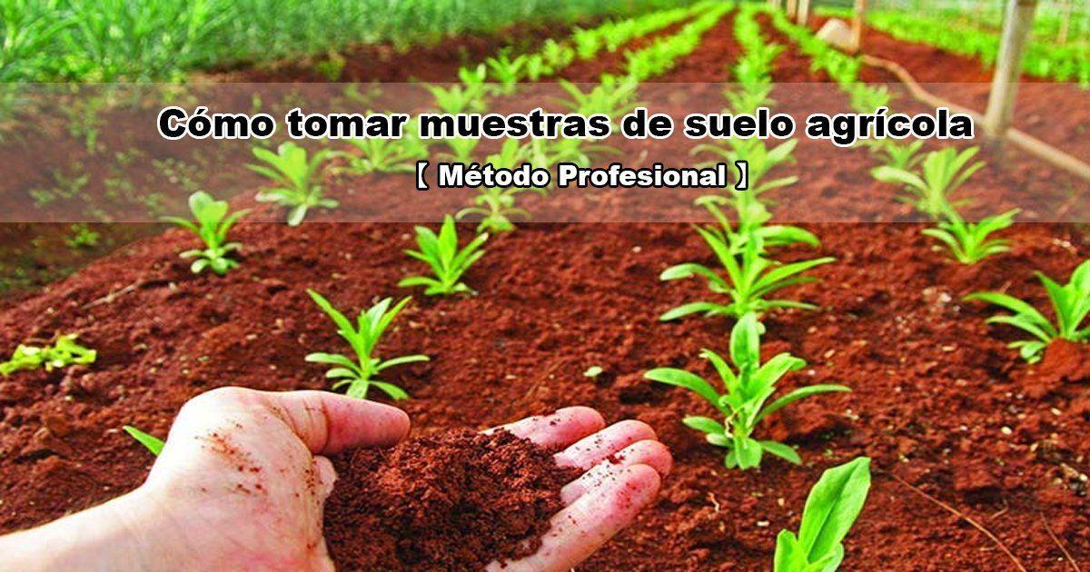 Cómo recojer muestras de suelo agrícola.