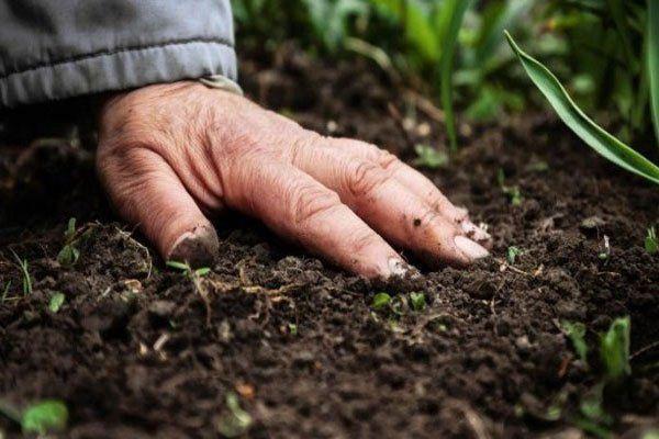 Biocontroladores del suelo agrícola