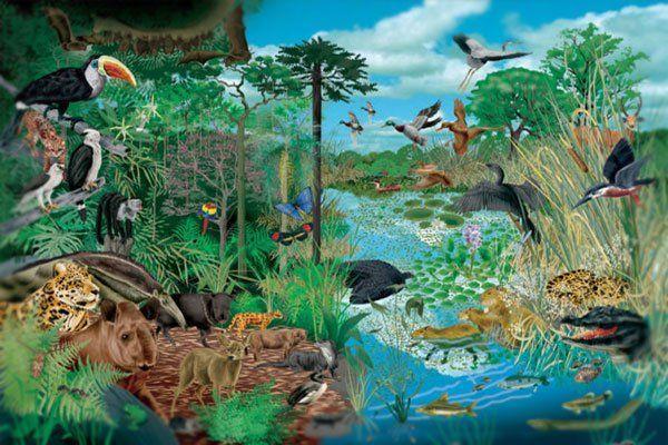 Manejo holístico. Ecosistemas.