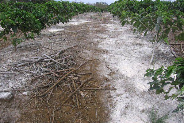 ph del suelo - Corrección de suelos ácidos con dolomita.