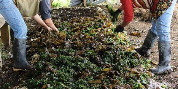 Capa de algas para compost