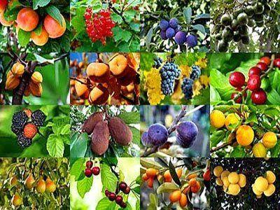 Manual de cultivo. Frutales.