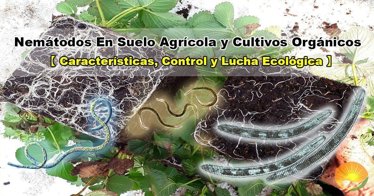 Nemátodos en suelo y plantas