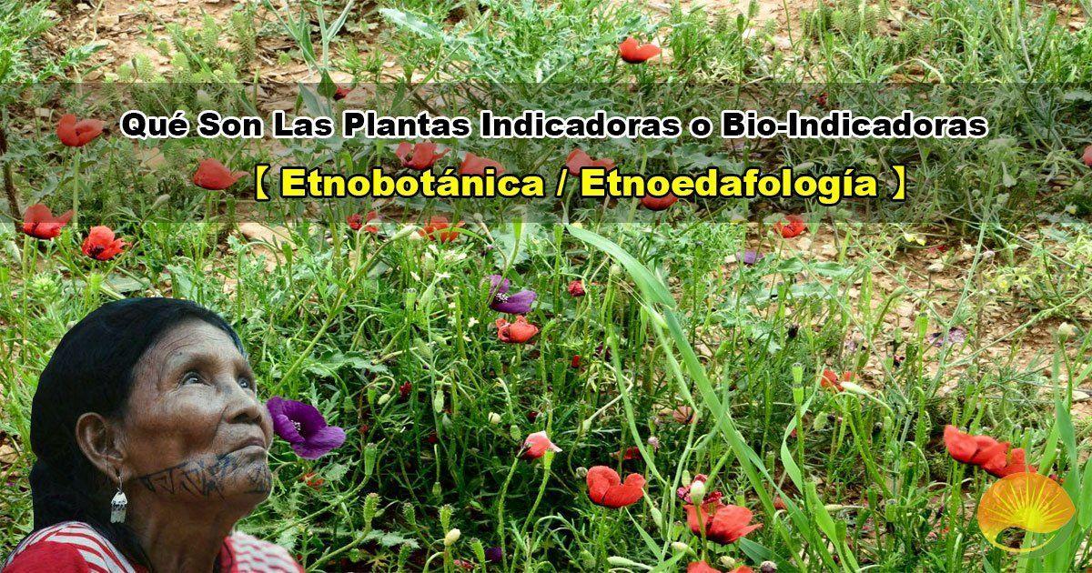 Qué son las plantas indicadoras