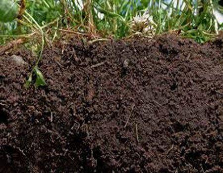 Plantas indicadoras de suelo fértil.