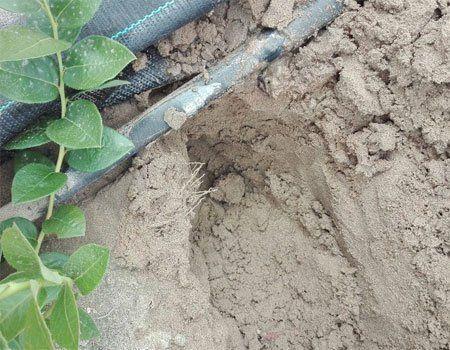 Plantas indicadoras de suelos ácidos.