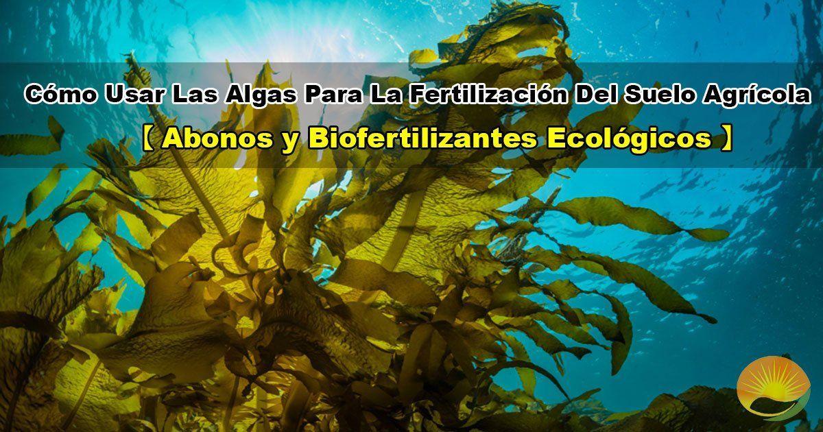 Algas para uso en agricultura
