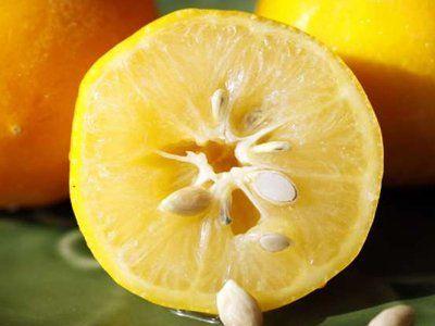 Semillas de cítricos. Limón.