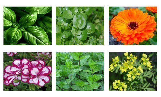 Plantas vivas para usar en casa