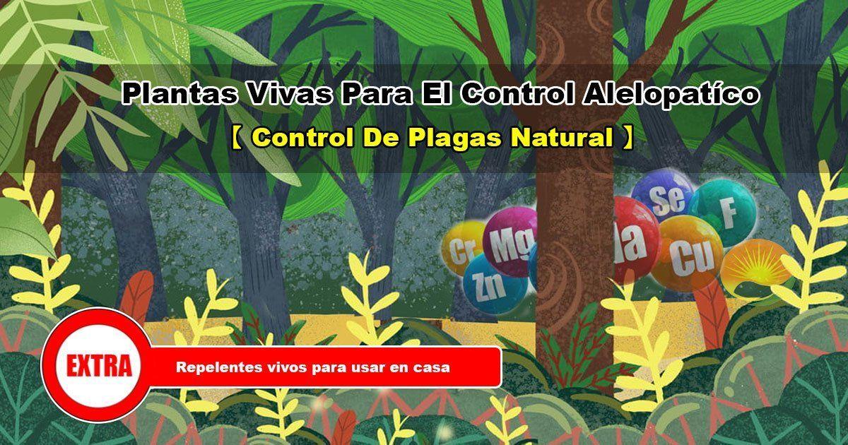 Plantas vivas para el control de plagas
