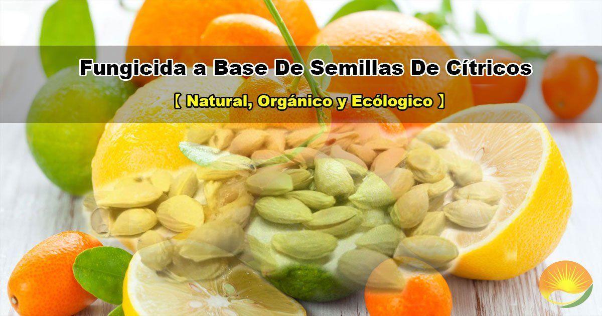 Extracto de semillas de cítricos
